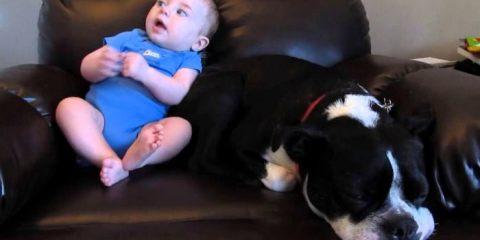 μπέμπης τα έκανε και ο σκύλος αντιδρά με ξεκαρδιστικό τρόπο
