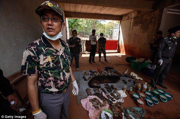 κουφάρια από τίγρεις βρέθηκαν σε δημοφιλή ναό της Ταϊλάνδης 5