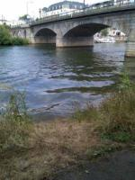 Fishing in Staines