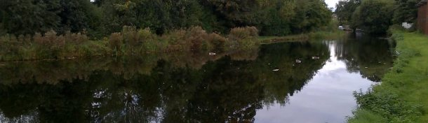 A fishing swim on the canal at Ash, Surrey