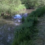 Angling on the Bramley Wey