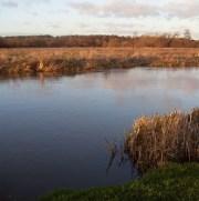 Fishing in Surrey