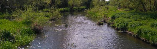 The River Colne Brook at Wraysbury