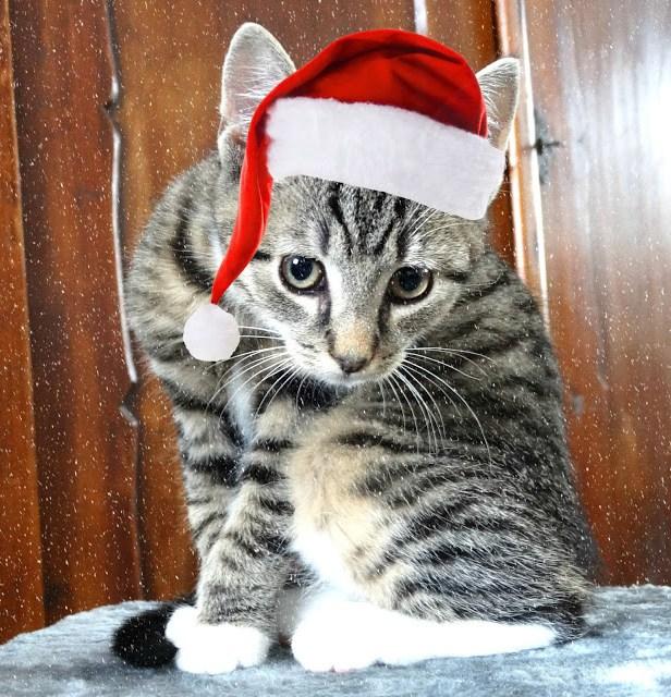 553b9 dsc083432b252812529 - Fijne kerstdagen & bedankt voor alles!