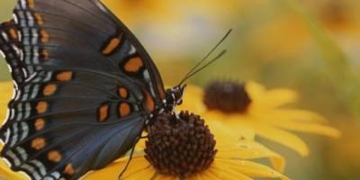 Butterfly gardens in Bethesda