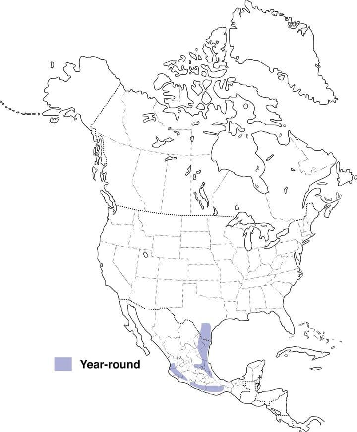 Baltimore Oriole Migration Map : baltimore, oriole, migration, Audubon's, Oriole, Range, About, Birds,, Cornell, Ornithology