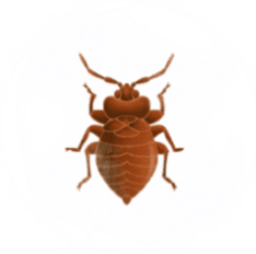 Bed Bug Pest Control for Sevierville TN and Surrounding Areas