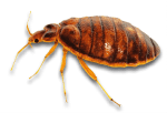 Bed Bug Infestations in Sevierville, TN