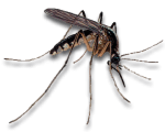 Mosquito Infestations in Sevierville, Tennessee