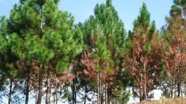 деревья в камбодже
