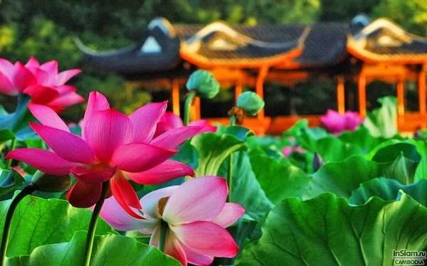 весна в камбодже