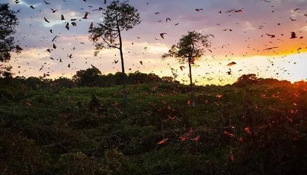 незабываемая камбоджи