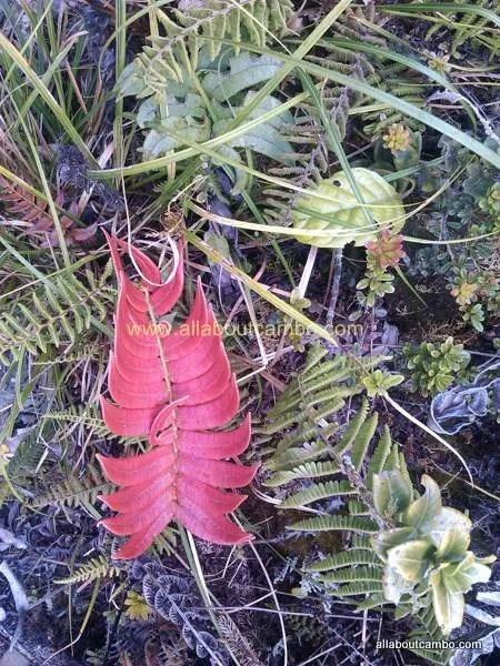 интересная природа на борнео