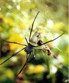 комары в Камбодже
