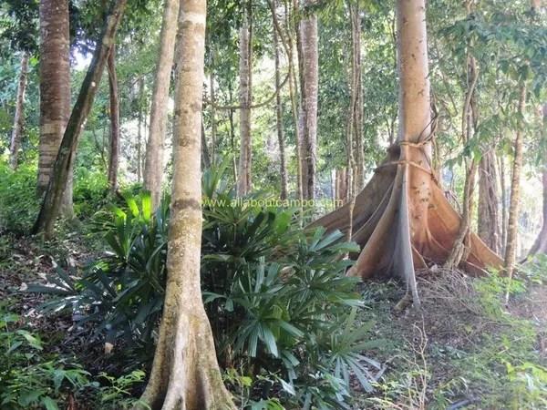 природа на борнео