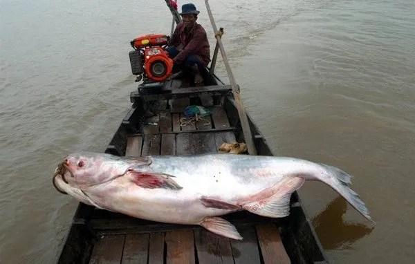 рыбалка на Меконге, Камбоджа