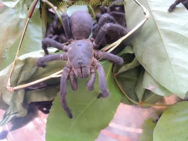 животные в камбодже