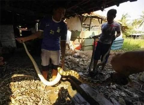 поесть змею в Камбодже