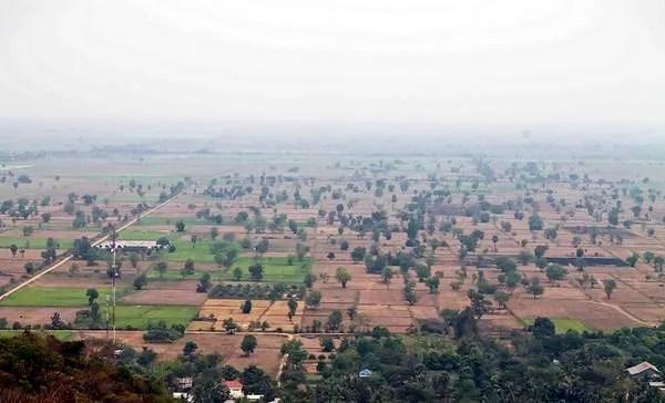 поля в Камбодже