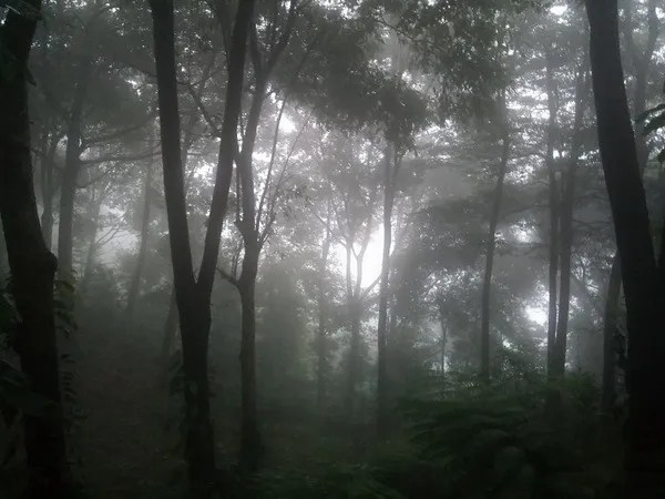 дождь _Болавен _джунгли