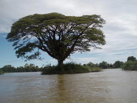 на лодке по меконгу Лаос