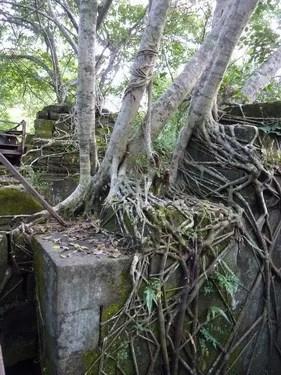 деревья камбоджи