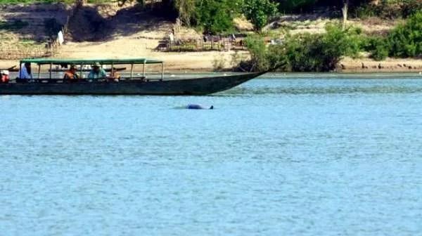 дельфины в Меконге