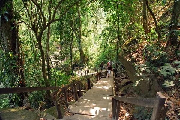 джунгли в кабодже