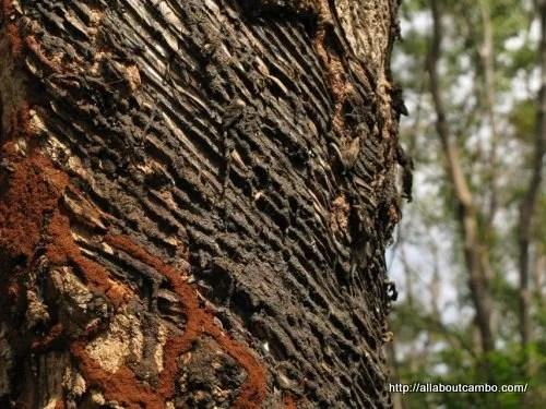 22-нефтяное дерево вирачей