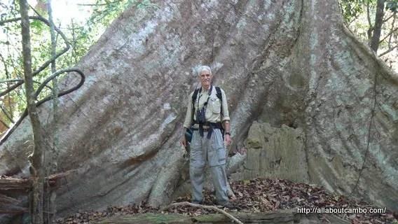34-гигантское дерево вирачей