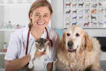 perros y gatos12