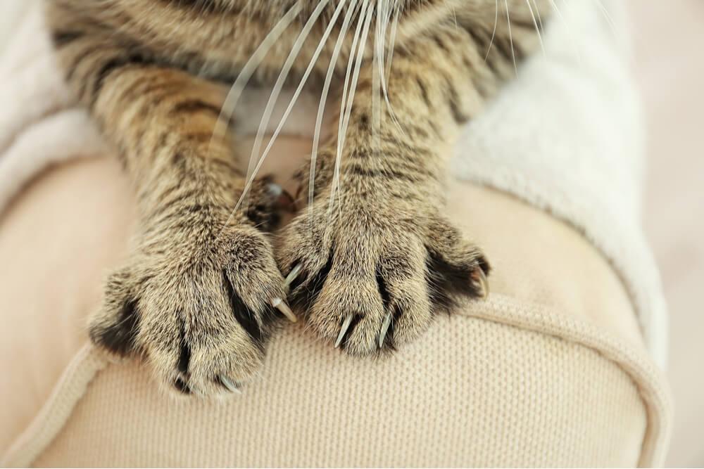 Garras de gato en muebles