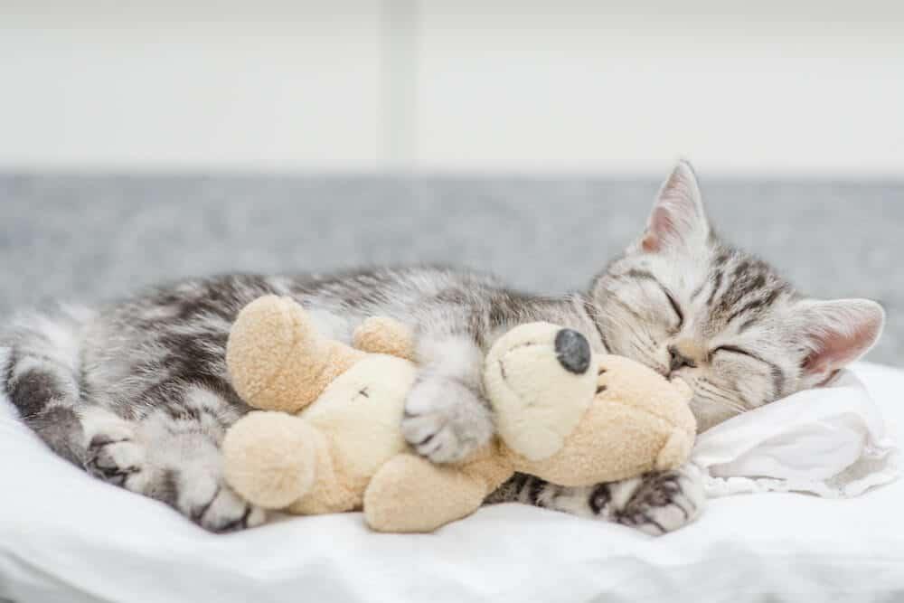 Juguete para abrazos en frío para gatos