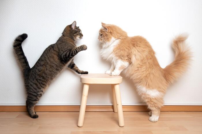 ¿Mis gatos juegan o se pelean?