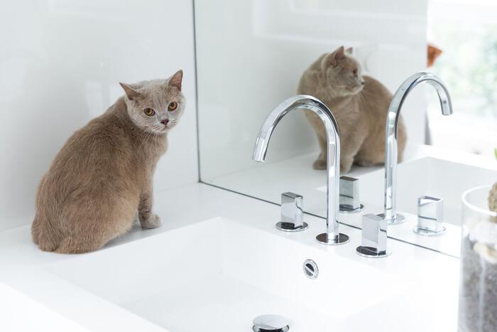 Peligros de Neosporin para gatos