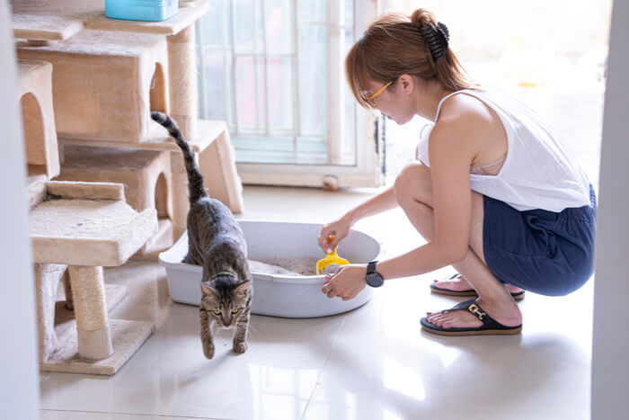 woman cleaning cat litter box