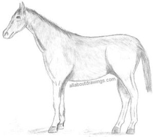 horse drawing horses draw pencil drawings sketches each simple sketch gives books different collections wallpapers designs allaboutdrawings