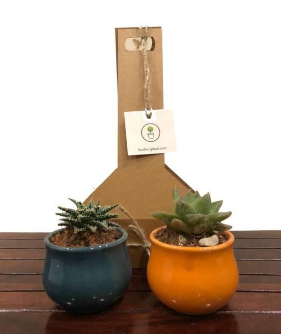 gifting plants
