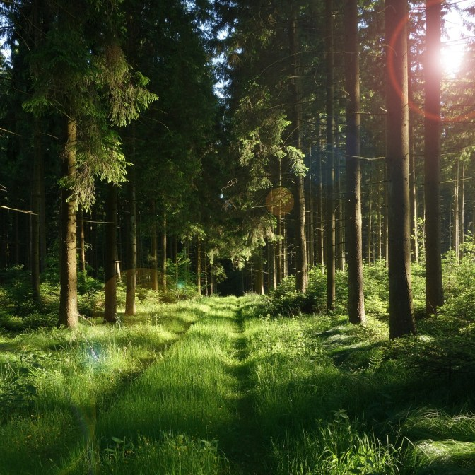 forest-458324_1920
