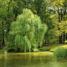 tree-984846_1920