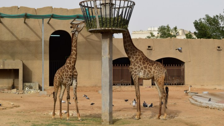 Riyadh Zoo – In Pictures