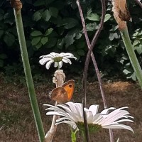 A Flower And A Butterfly