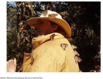 Mexico's Monarch Butterfly Sanctuaries