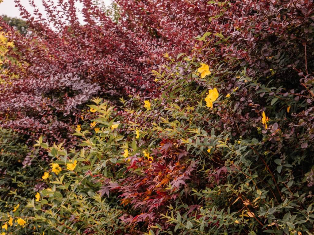 Blooming flowers in Shekina Sculpture Garden in Wicklow