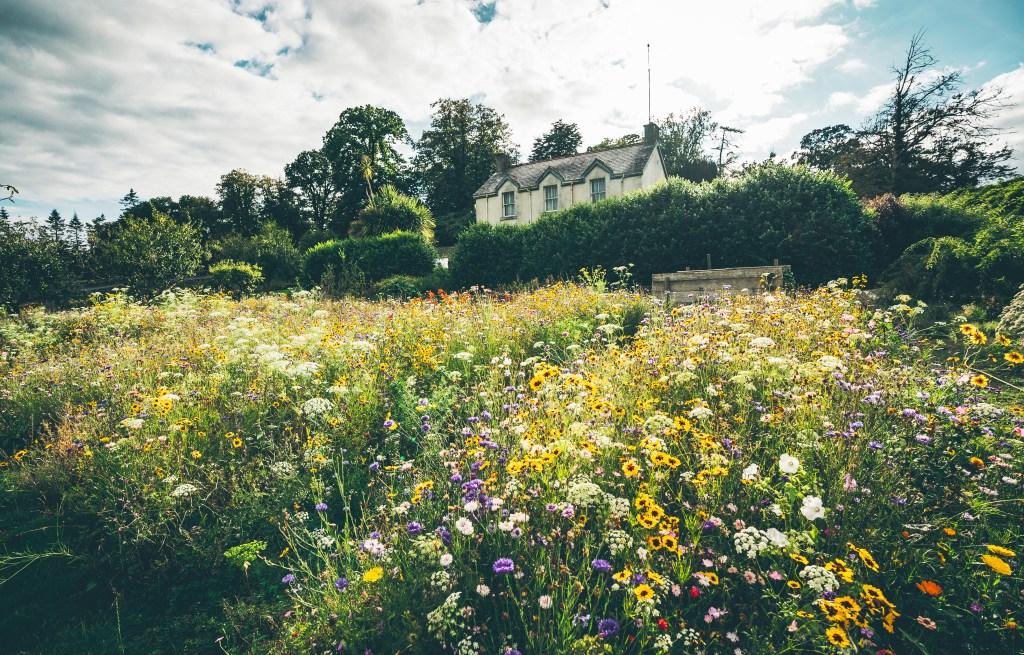 Wild flowers growing in the gardens of Mount Congreve Ireland