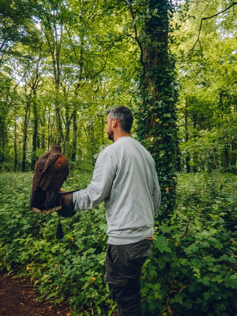 Man doing a hawk walk at Mount Falcon in Ireland