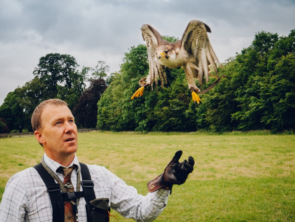Peregrine falcon landing on a falconers hand the perfect weekend in Kilkenny thing to do.