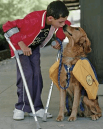 An image of a boy with crutches and his service dog.
