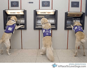 An image of a service dog .The dog is shown in three positions: when it is conducting the following operations at the ATM machine: depositing a check, waiting for the transaction to be finalized and taking a deposit slip.