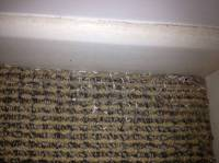 How to Get Rid of Carpet Moths | All Aces Services